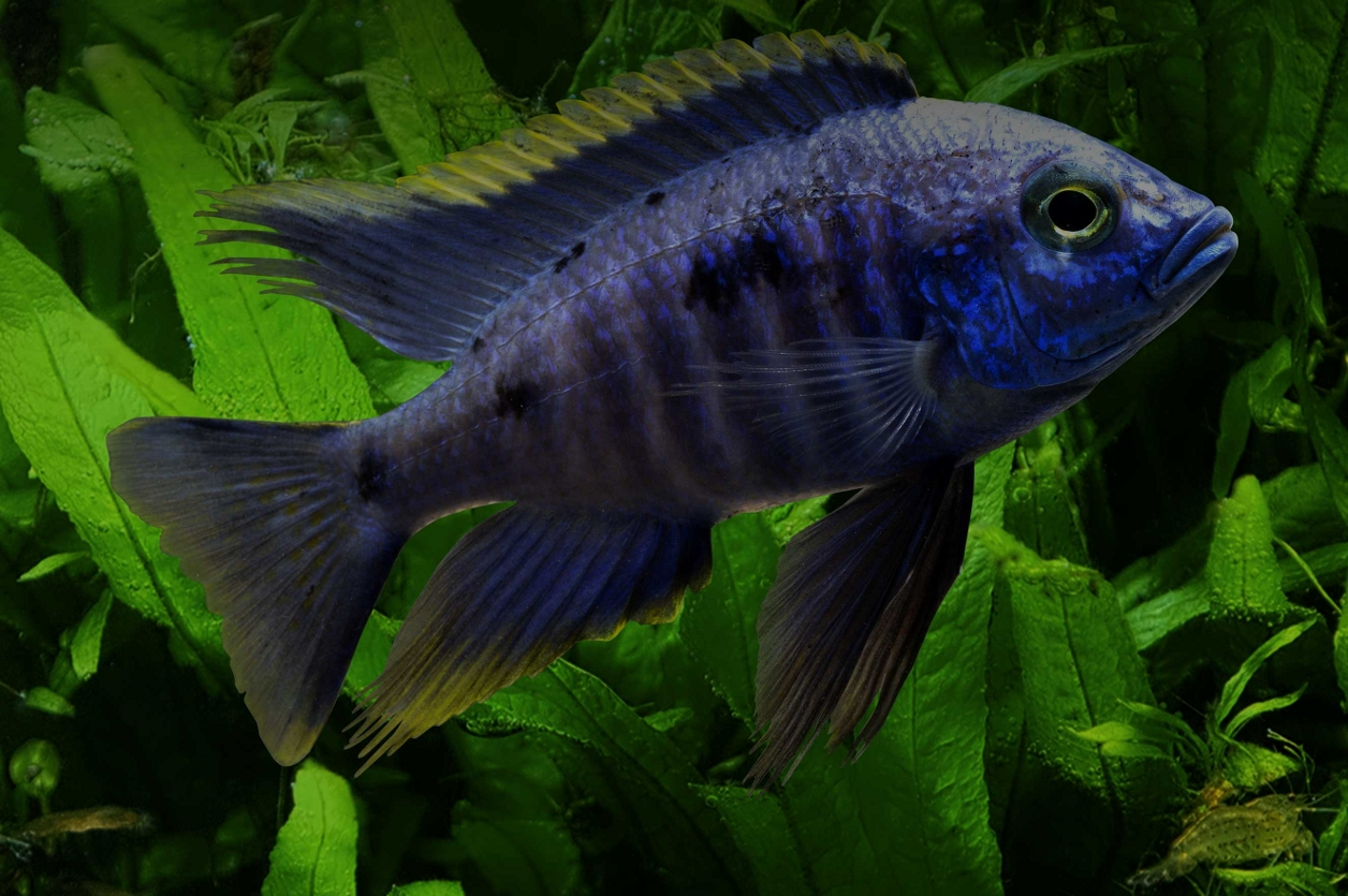 Welcome to New Life Spectrum Premium Fish Food for Colour and ...